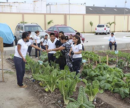 Estudiantes elaboran huerto casero