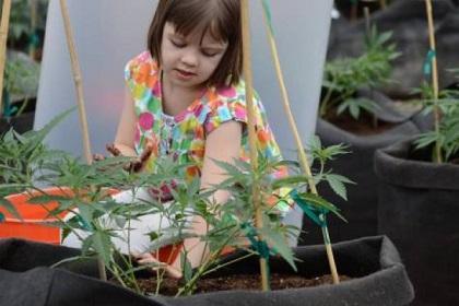 Niña epiléptica de 3 años salva su vida con marihuana medicinal