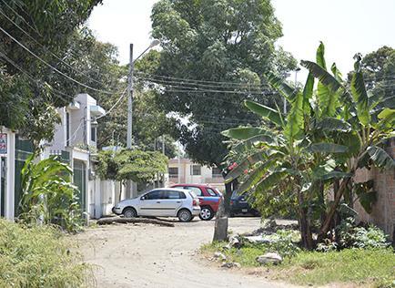 Un árbol está sembrado en medio de una calle  en la Cdla. Los Mangos
