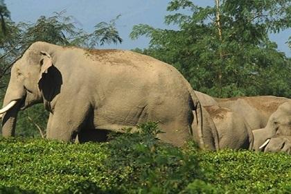 """Atropellan a un elefante  y su manada  se """"venga"""""""