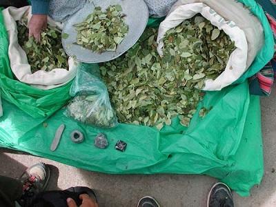 Plantean exportar harina de coca para tratar adicción a la cocaína