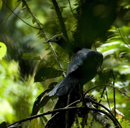 El Gobierno autoriza la explotación de la reserva Yasuní ITT