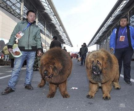 Cierran un zoológico que hacía pasar perros por leones