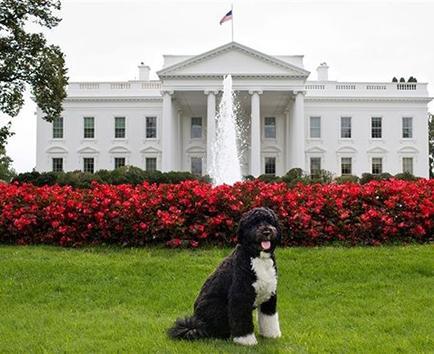 El perro de Obama es famoso