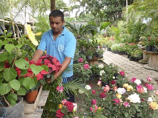 Vivero oferta m s de 200 variedades de plantas el diario for Viveros en capital