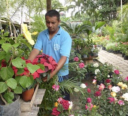 Vivero oferta más de 200 variedades de plantas