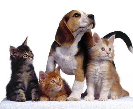 La pirotecnia altera los nervios de las mascotas