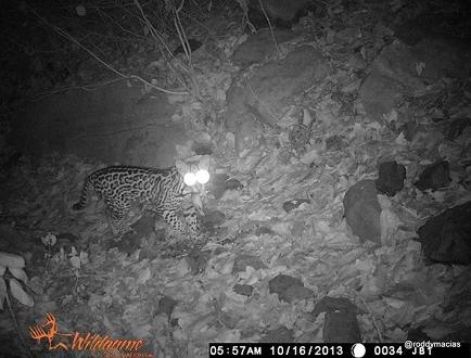 Instalan cámaras para monitorear a las especies que habitan en el Cerro Jaboncillo