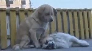 Perro se niega a abandonar el cuerpo de su 'amigo' que fue atropellado