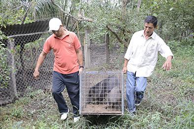 Trece animales fueron  trasladados a Santa Elena