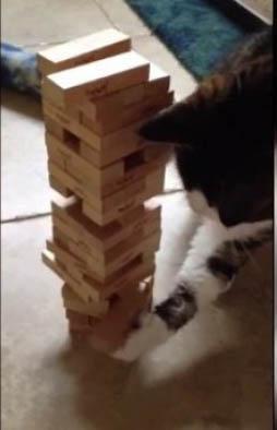 """Un gato sorprende con su habilidad para jugar """"jenga"""""""