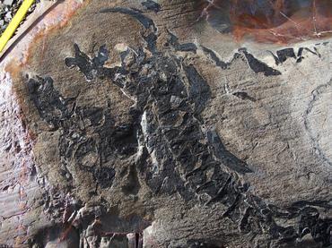 Descubren en Chile uno de los mayores cementerios de ictiosaurios