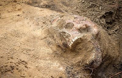 Unos 800 niños podrían estar enterrados bajo un convento irlandés
