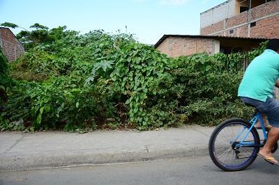 Moradores de El Porvenir piden cortar maleza en terreno