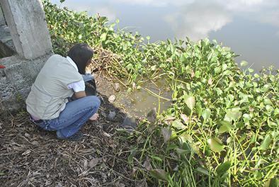 Liberan tortugas en el humedal La Segua