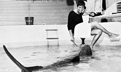 Mujer asegura haber tenido sexo con un delfín