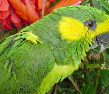 Fauna tropical mas traficada