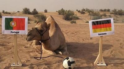 El camello Shaheen predice desde Dubái los resultados del Mundial