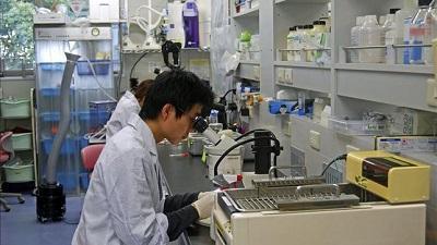Descubren un método para acelerar la regeneración de células del corazón