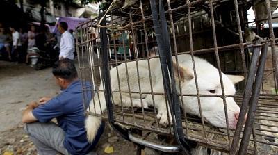 Chinos se preparan para la fiesta donde comen perros