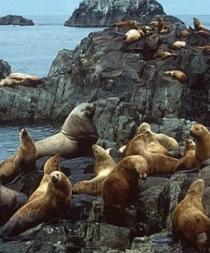 Las focas introdujeron por primera vez la tuberculosis en América