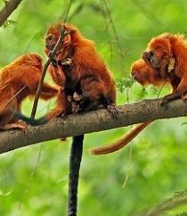 Una reserva evita en Brasil la extinción del