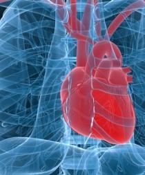 Hallan un nuevo gen responsable de alteraciones cardíacas y muerte súbita