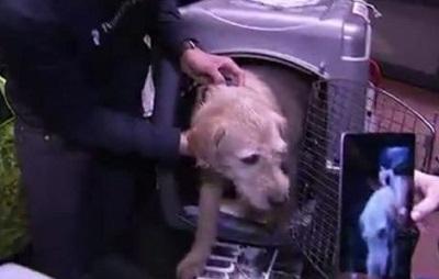 El perro ecuatoriano Arthur llegó a Suecia (Video)