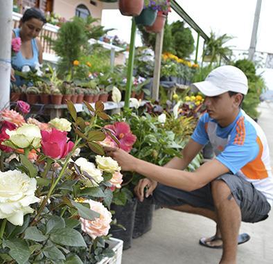 Florece el negocio  de árboles y plantas