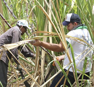Obtener etanol, la meta