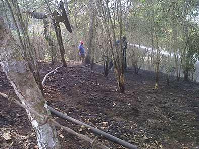 Quema de maleza destruye siete hectáreas de sembríos