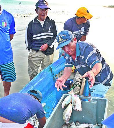 El 'pescado de los pobres' se exporta
