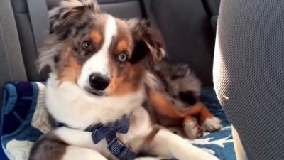 Cachorro 'canta' al escuchar una canción de la película Frozen