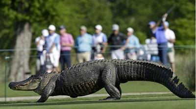 Golfista de 29 años muere tras ser mordido por un cocodrilo