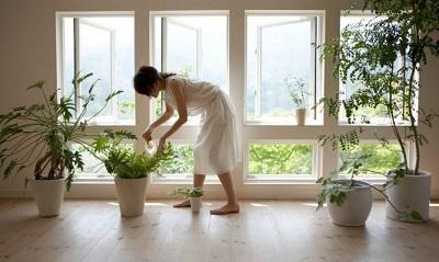 Luz y plantas dan  mejor ambiente