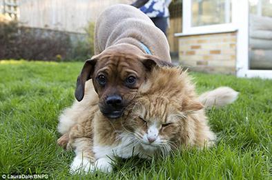 """El gato más gordo  """"entrena"""" con un perro para adelgazar"""