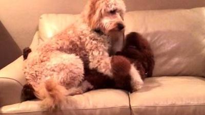 Perro 'abraza' a otro que tenía pesadillas (Video)