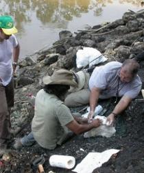 Hallan fósiles de siete especies de cocodrilos de 13 millones de años en Perú