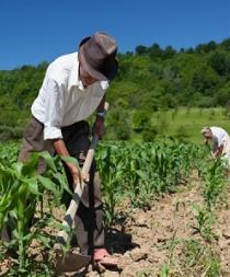 FAO pide 697 millones de dólares de ayuda agrícola para 31 países en crisis