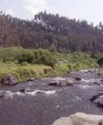 Encuentran camarones muertos por presunto envenenamiento en río de Pedernales