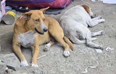 La ordenanza de tenencia de animales será reformada