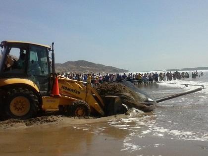 Tiburón ballena varado en Santa Marianita murió cerca de las 15h00 (video)