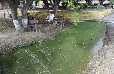 Agua estancada preocupa en los ngeles el diario ecuador for Peces de agua estancada