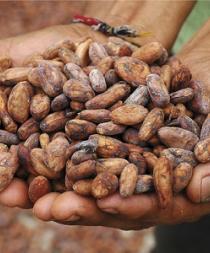 Francia y Ecuador refuerzan cooperación en torno al cacao y el chocolate