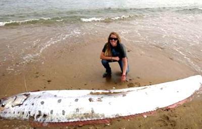 Hallan pez de 5 metros de largo