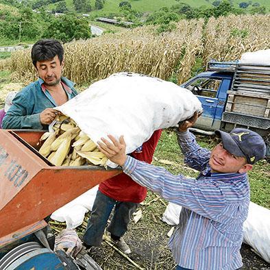 Manabí tiene la mayor superficie usada en tareas agropecuarias
