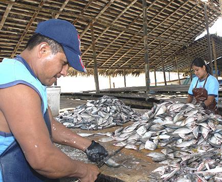 De a poco mejora la pesca de pinchagua