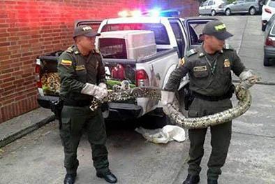 Tenían a una serpiente de mascota y la policía se la llevó