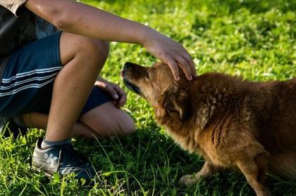 Los perros huyen a las personas desagradables con sus dueños