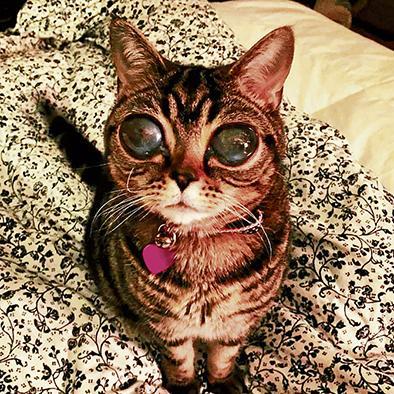 Los grandes ojos de una gatita cautivan